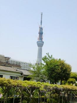 110504亀戸天神社_07.JPG