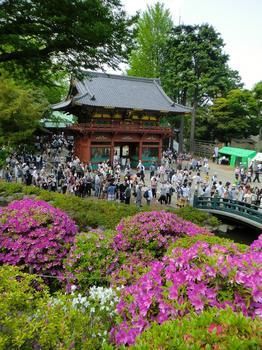 110504根津神社_57.JPG