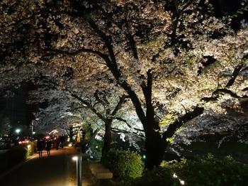 DSC02756松川夜桜G.JPG