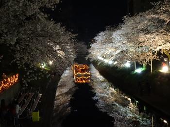 DSC02759松川夜桜G.JPG