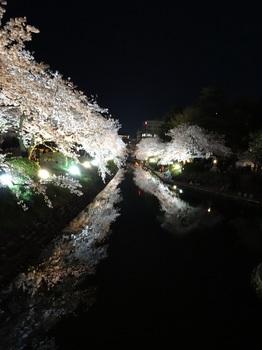 DSC02782松川夜桜G.JPG