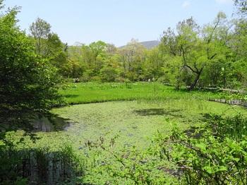 DSC03164湿生花園.JPG