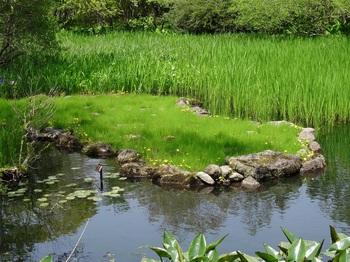 DSC03209湿生花園.JPG