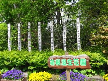 DSC03220湿生花園-やんごとなき.JPG